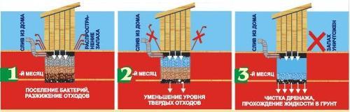 Принцип действия биопрепарата Санэкс